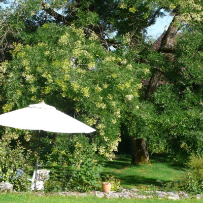 Vue du jardin et de la terrasse du gîte RIBIERAL.